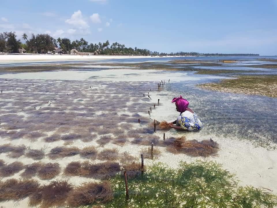 10 cose da fare a Zanzibar - coltivazione delle alghe a Uroa